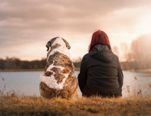 Empatía. La importancia de las emociones
