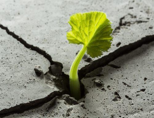 Importancia de la resiliencia en nuestro día a día