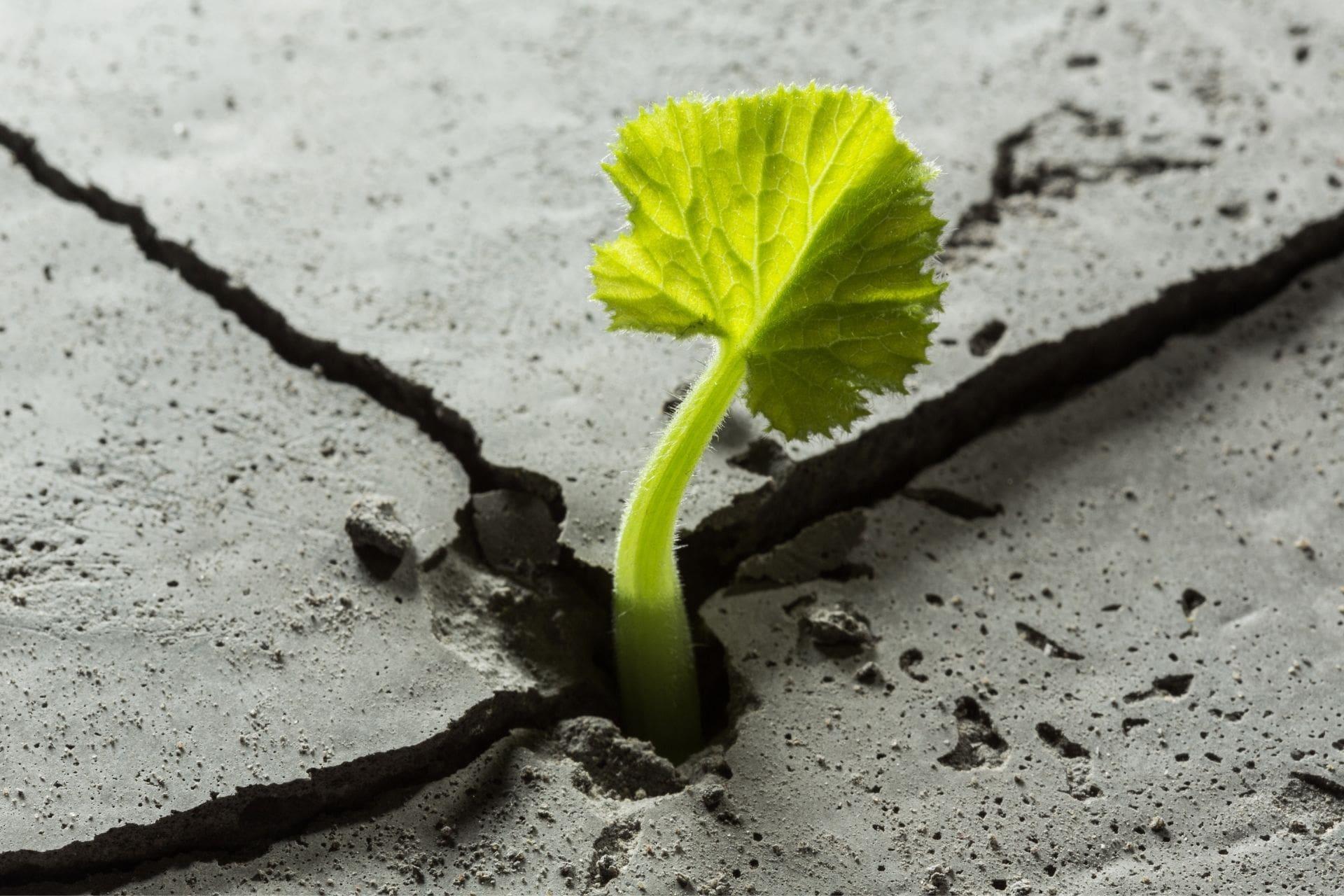 resiliencia personas